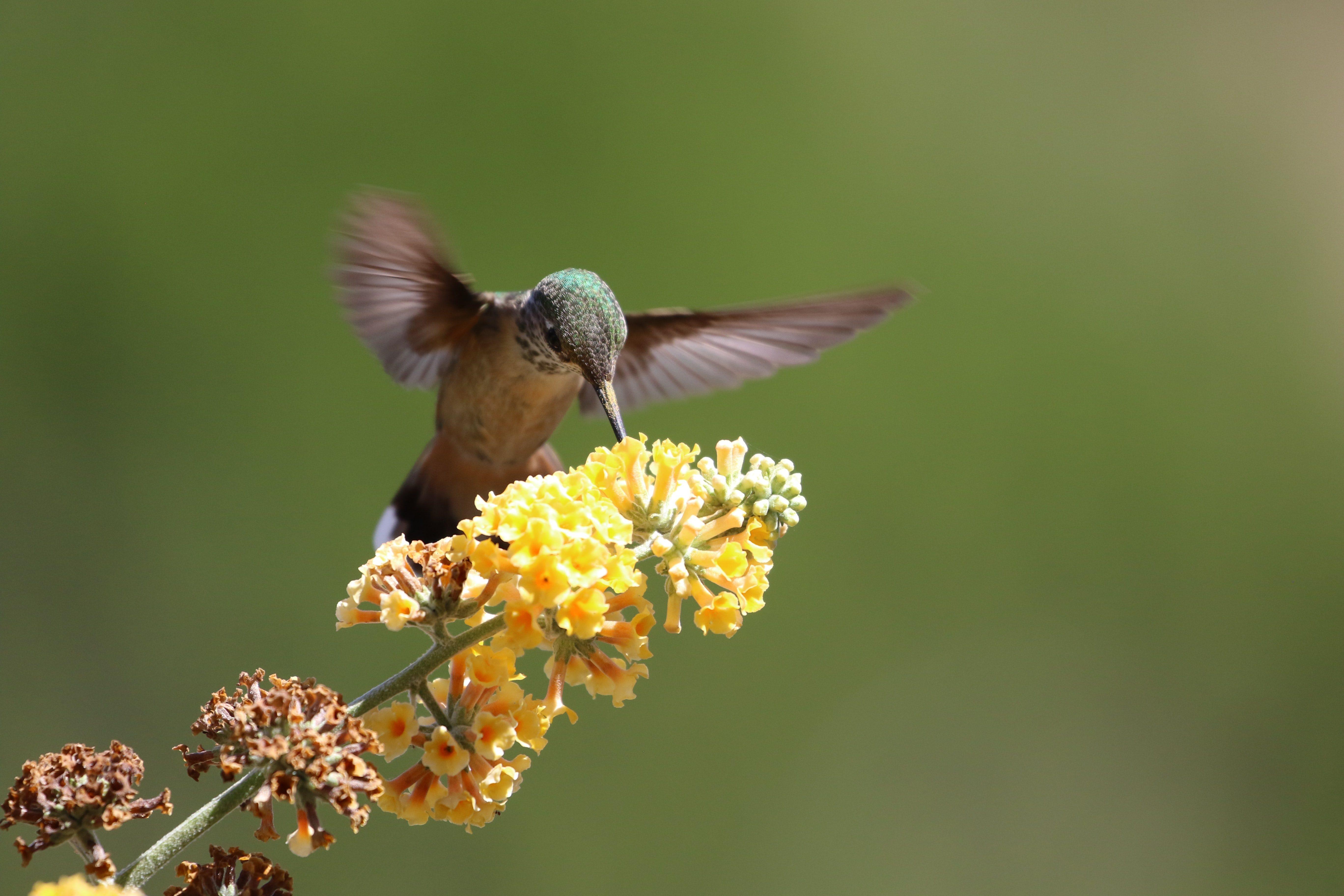 Hummingbird 6 15 2021 John Duncan Os Ukhti4Cak Unsplash