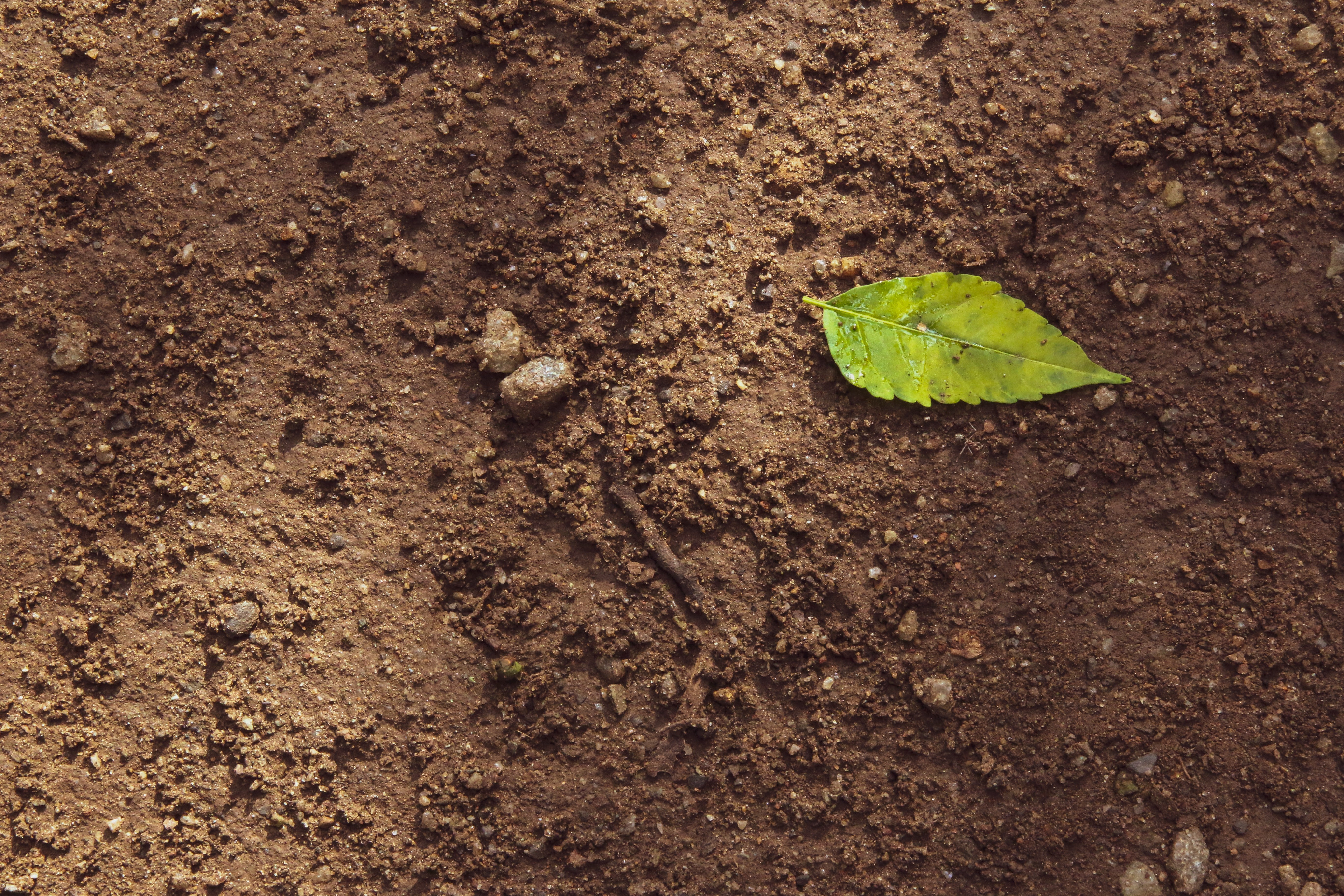 Digging Deeper: The Story of Soil